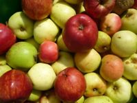 Apples (Wanted) Windfalls or Unwanted crops.