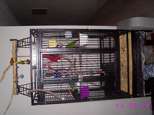 Two Green Cheek Conures with Large Cage Stratford Kitchener Area image 9