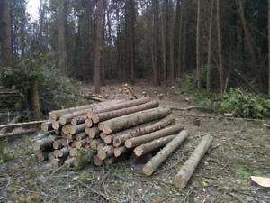 Fresh cut cedar posts and rails for sale.