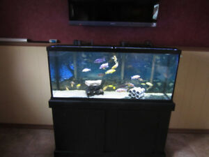 FISH AQUARIUMS AND FISH,,