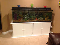 135 gallon fish tank for sale with everything