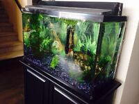 30 gallon tank with stand