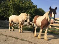 Help with my horses