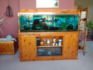 120 gallon tank with stand and accessories