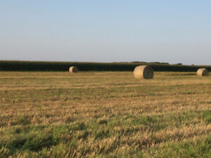 Combined Brome Grass, Timothy and Crested Wheat Grass Bales