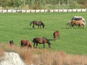 Straight grass hay