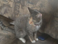Lost Cat Please Help