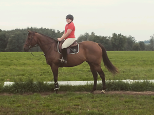 Gelding available for part board only