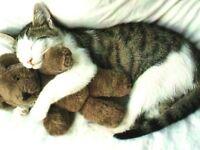 Pension pour chats choyés