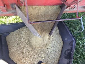 Feed Barley and feed oats for sale