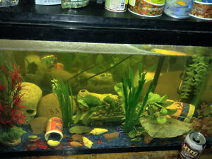 Two 30 gallon fish tanks with everything...