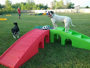 Cage-free pet resort Doggie Daycare and Dog Boarding