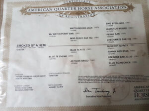 2007 Registered Quarter Horse for sale
