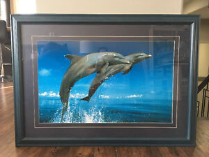 Dolphin mattedanf framed picture