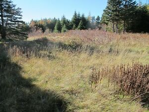 For sale 1.84 acres of land in lovely in Chapels Cove, NL St. John's Newfoundland image 5