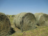 Horse quality Hay for Sale - SOLD