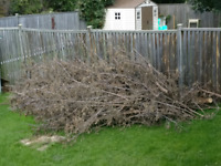 Wanted: someone with a chipper to clear and remove tree branches