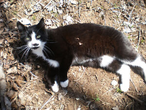 Missing Cat 'Charles' from Burlington Area