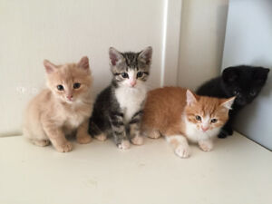 Adorable Baby Kittens Ready to Leave