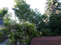 Experienced tree trimmer with great rates