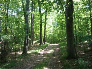 Wanted: Bush lot or Acreage to build on, Wood