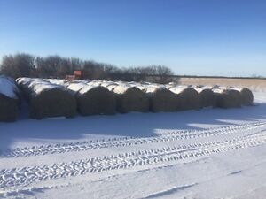 Green feed oat bales