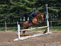 Riding lesson & Horse boarding