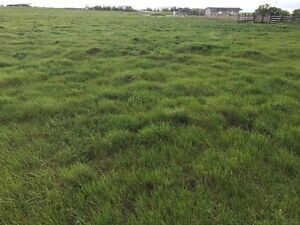 Vacant Land East of Calgary, Nr Strathmore on Twshp Rd 232