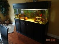 110 Gallon tank with Everything included And Fish