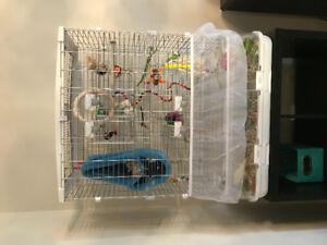 Magnifiques Couple d'inséparables avec grande cage !!!!