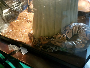 Tank and snake