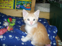 ONLY 4 LEFT @ PETS NEED LOVE 2 RESCUE