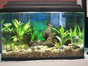 Fish tank / Aquarium 20 gallons