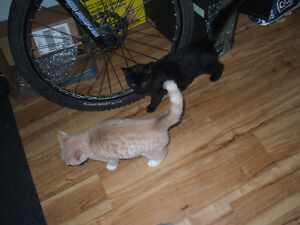 2 chatons a donner