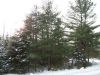 2 Acre Wooded Lot for Sale - 20 mins west of Kanata