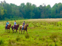 ***Horseback riding  25$ *** Randonner de cheval***