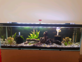 4ft clear seal fish tank and base