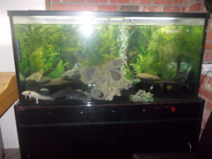 pair axolotl with 90 gallon tank