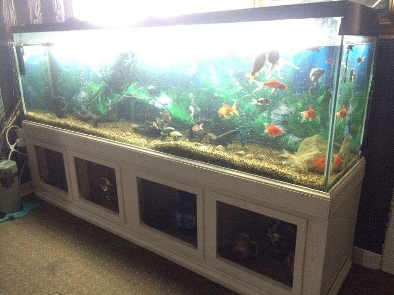 Big tank fish for sale in knightswood glasgow gumtree for Used fish tanks for sale many sizes