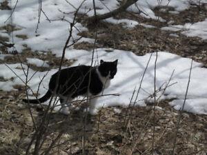 Missing tuxedo cat in Southampton.