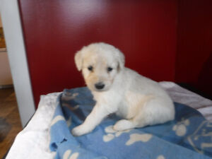 Puppies | Adopt or Rehome Pets in Newfoundland | Kijiji Classifieds