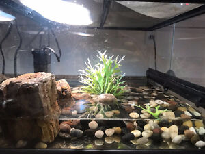 Turtle and Its tank Needs a new Home