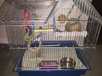 FREE: Parakeet with cage, food