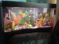 Tropical fish tank setup + Fish