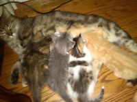 Four kittens, friendly can be playfully yours