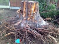 """Free firewood"""