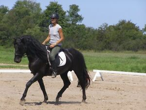 Standing at Stud: Registered Canadian Stallion