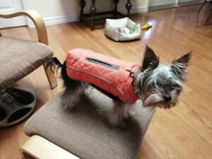 Easy on/off small dog coats