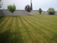 SPRING LAWN CLEAN-UPS / LAWN MOWING