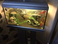 35 litre tropical fish tank for sale £50 Due to time waisters